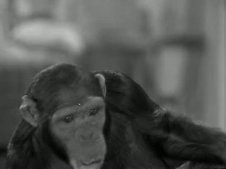 Tarzans нов york adventure (1942)
