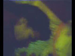 Zorrica monica tello prepa rio verde slp wideo