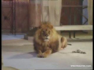 שחור widow, the roman ו - the lion