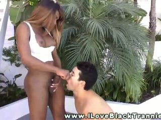 shemale, blowjob, tranny, black